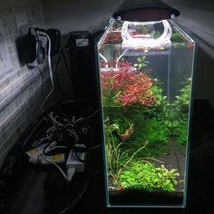 911 отметок «Нравится», 3 комментариев — @shrimpery в Instagram: «low tech #natureaquarium #plantedtank #plantedaquarium #aquascape #aquascaping #fishtank #aquarium…»