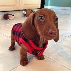 Instagram Photo -- Follow us @Redbarn Pet Products | Flickr - Photo Sharing!