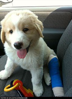 Awwwww even with that broken leg he's smiling.