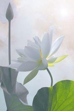 Resultado de imagem para somos la maravillosa luz del amor