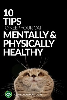 Here are the 10 tips to keep your cat mentally & physically healthy. These tips will help you become the best cat owner & to make your cat more happy