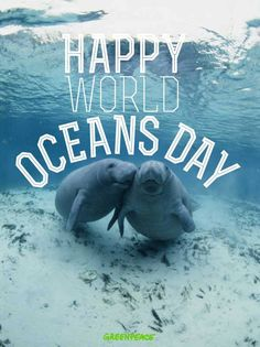 Happy World Oceans Day everyone :)