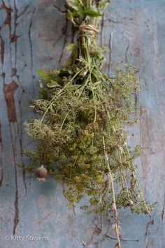 Herbs,kruiden