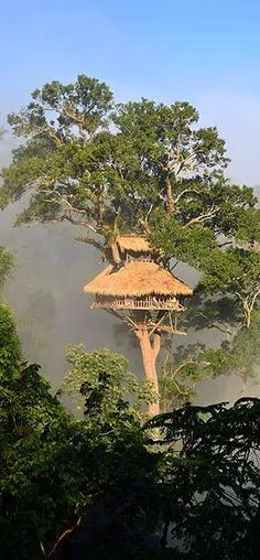 Tree house lodging in Laos