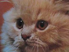 kittens inspired by kittens - best YouTube video EVER