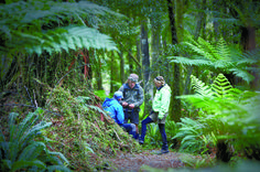 The Hollyford Track is one of New Zealand's greatest walks. New Zealand writer Jacqui Gibson walked the track. Here are eight reasons you should too. Marlborough Sounds, Waiheke Island, Great Walks, New Zealand Travel, South Island, Out Of This World, Walking Tour, Adventure Travel, Are You Happy
