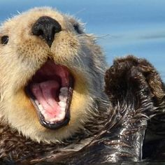 Good otter w big smile yes