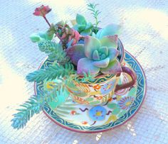 Petite Teacup Succulen Succulent Arrangement by BellasJardin, $15.00