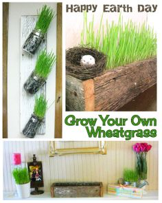 Grow Your Own Wheat Grass in a Week! (Bringing some Earth Inside- Belated Earth Day Post)