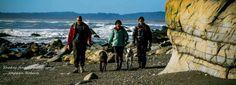 Okarito South Westland - 3 mile lagoon beach walk http://coastingnz.wordpress.com/2014/09/01/okarito-3-mile-lagoon-beach-walk/