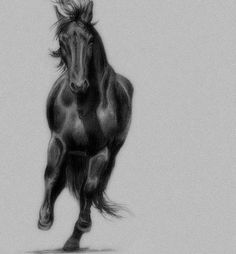 Horse/Drawing/Graphite