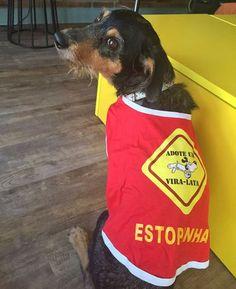 Olha Gente a Estopinha : Olha Gente a Estopinha veste Bom Pra Cachorro, acesse nosso site http://www.bompracachorro.com/p-1-9-125/Caomiseta---Adote-um-Vira-lata- | camisetasdahora