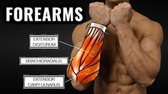 The forearm muscle is the most neglected muscle that you have in your entire body. Very few people take the extra time to pay added attention to this muscle, and yet it performs a very crucial role in the functional movements. There are a ton of them. Heck, just about anything you do in the gym will help forearms. Two pieces of advice: 1. Do forearm exercises last. A weakened grip will adversely effect your other lifts. 2. If it hurts, like a sharp pain, STOP and reconsider.