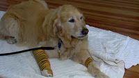 """""""O GRITO DO BICHO"""": Cachorro se joga na frente de ônibus para salvar d..."""