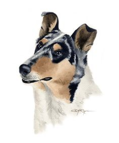 Smooth Collie Dog Watercolor Painting ART Print by k9artgallery
