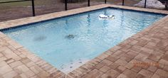 Superior Pools Port Charlotte FL www.superiorpoolsswfl.net   Basic square pool with brick coping and pavers