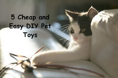 5 Cheap and Easy DIY Pet Toys #fun #toys #pet #cat #dog Old Cats, Cats And Kittens, Cat Info, Sunday Quotes, Diy Stuffed Animals, Cat Toys, Cat Memes, Pet Care, Play