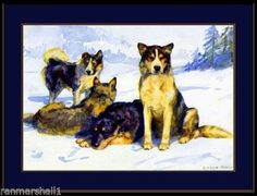 English-Print-Siberian-Husky-Sled-Dog-Dogs-Puppy-Puppies-Vintage-Art-Poster