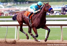 American Pharaoh racing in the Kentucky Derby.