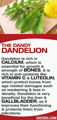 Dandelion is rich in calcium, which is essential for growth & strength of bones, & is rich in anti-oxidants like vitamin C & Luteolin, which protect bones from age related damages such as weakening & loss in density. Dandelion is very beneficial for the liver & gallbladder, as it improves their functioning & protects them from infections. #dherbs #healthtips