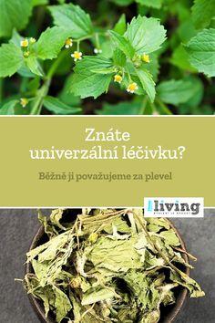Korn, Herbalism, Herbs, Nature, Diy, Compost, Alcohol, Herbal Medicine, Naturaleza