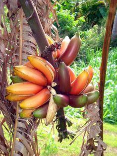 Frutas Exóticas e Coloridas