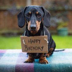 Happy Birthday Dachshund #dachshund
