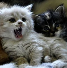 \We quickly discovered that 2 cats were much more fun than one.\