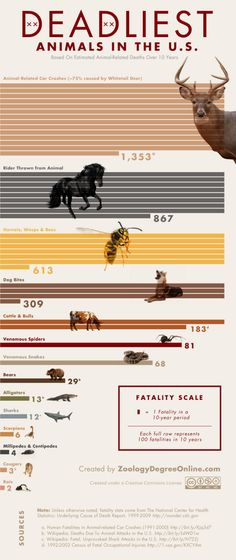 Infographic: Deadliest Animals in the US (and another good reason deer season is a holiday)