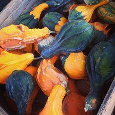 Fall colors at the pumpkin farm