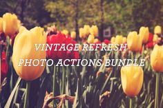 Vintage Refresh Photo Actions Bundle by Mike Moloney on @creativemarket