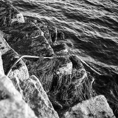 """""""Up the coast in Maine.  #exploring #Maine #myMaine #wandering #exploreusa #exploreMaine #exploreAmerica #summer #August #bnw #blackandwhite #daylight #water #breakwater #lookingdown"""" Photo taken by @ndoocy on Instagram, pinned via the InstaPin iOS App! http://www.instapinapp.com (09/04/2015)"""