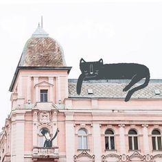 Black Cat Art, Black Cats, Dog Poster, Illustration Art, Illustrations, Cat Pin, Cat Stuff, Aesthetics, Street View