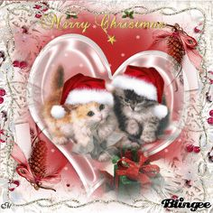 for my dear friend – animal wallpaper Merry Christmas Gif, Merry Christmas Wallpaper, Christmas Kitten, Christmas Snow Globes, Beautiful Christmas Cards, Christmas Scenes, Christmas Animals, Merry Christmas And Happy New Year, Christmas Love
