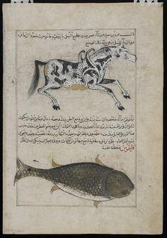 Water Horse (Faras al-Ma), Whale (Qatus), from Aja'ib al-makhluqat (Wonders of Creation) by al-Qazvini, early 15th century, Iraq or Eastern Turkey Opaque waterco...