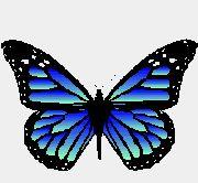 Farfalle glitter, immagini glitterate