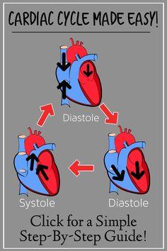 Cardiac Anatomy, Human Anatomy And Physiology, Medical Anatomy, Brain Diagram, Heart Diagram, Icu Nursing, Nursing Notes, Heart Structure, Cardiac Cycle