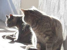 Olivia e Rosy