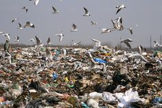 Incinerating trash is a waste of resources ~ insights from environmentalist Dr. David Suzuki.
