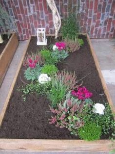 succulent garden care Wonderful Pic rose garden container Concepts Flower caution is very simple in comparison with anyone thinkyou can now expand these successfully. Seed your. Colorful Succulents, Succulents In Containers, Succulents Garden, Easy Garden, Herb Garden, Indoor Garden, Garden Care, Garden Maintenance, Garden Signs