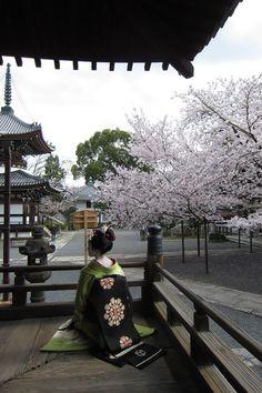 Maiko on japanese traditional terrace. Japanese Cherry blossom garden. #japan #kyoto #geisha #geiko #maiko #kimono #japanese culture