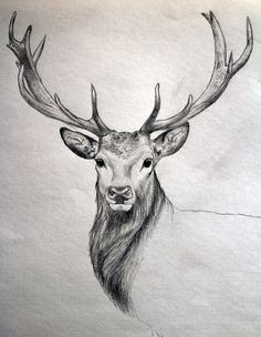 #drawing #deer #realistic #painting #animal #stag #art
