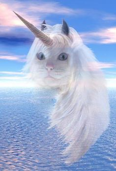 It's magic. Unicat!