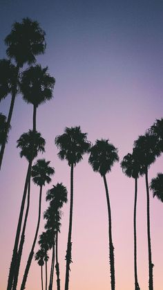 'Purple Sunset Palm Trees' Canvas Print by newburyboutique Iphone Wallpaper Tropical, Sunset Wallpaper, Tree Wallpaper, Nature Wallpaper, Aesthetic Backgrounds, Aesthetic Iphone Wallpaper, Aesthetic Wallpapers, Wallpapers Tumblr, Pretty Wallpapers
