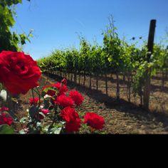 Viinitarha Vineyard, Plants, Outdoor, Italia, Outdoors, Flora, Plant, Outdoor Games, Outdoor Living