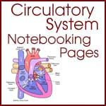 Circulatory System Notebooking Pages; Anatomy; Classical Conversations Cycle 3 Science