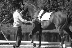 Walter Zettl: Up In Heaven.The Language of Harmony Horse Books, Horse Training, Dressage, Equestrian, Behind The Scenes, Heaven, Language, Horses, French School
