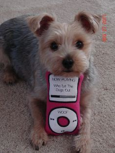ipod dog toy. How cute is this?!