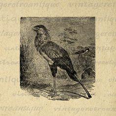 Printable Secretary Bird Graphic Image by VintageRetroAntique