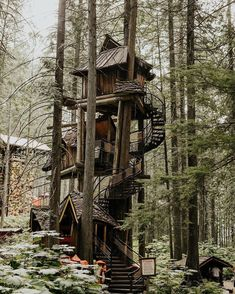 """""""Lost in the forest 🌲"""" Video Photography, Amazing Photography, Nature Photography, Canon Photography, Photography Training, Stay In A Treehouse, Wanderlust Hotel, Architecture Design, Nature Collection"""
